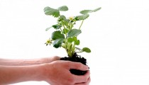 4 Ways to Teach Your Little One the Value of the Plant Life Cycle